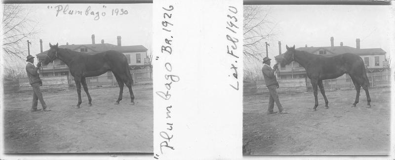 Plumbago (1926), cheval de course vu de profil et homme devant une maison