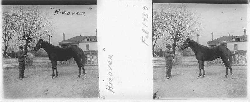 Hieover, cheval de course vu de profil et homme devant une maison