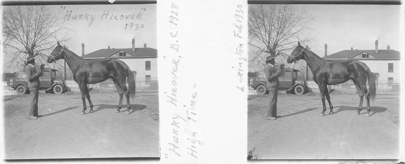 Happy Hieover (1928), cheval de course vu de profil et homme devant une maison. Pedigree : High Time (1916)