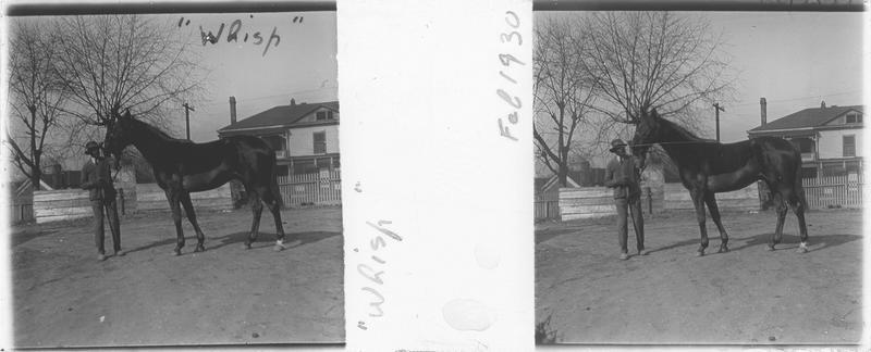 Whisp, cheval de course vu de profil et homme devant une maison