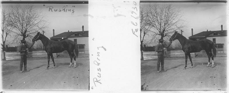 Rushing, cheval de course vu de profil et homme devant une maison