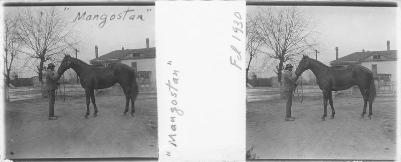 Mangostan, cheval de course vu de profil et homme devant une maison