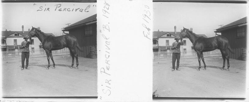 Sir Percival (1928), cheval de course vu de profil et homme devant une maison. Pedigree : Sir Gallahad (1920) et Sun Spot (1921)