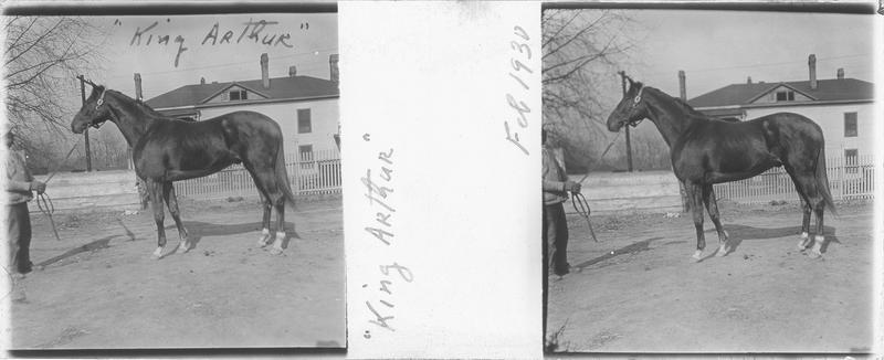 King Arthur (1928), cheval de course vu de profil et homme devant une maison. Pedigree : Sir Gallahad (1920) et Ten-Lec (1918)