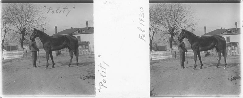 Polity, cheval de course vu de profil et homme devant une maison