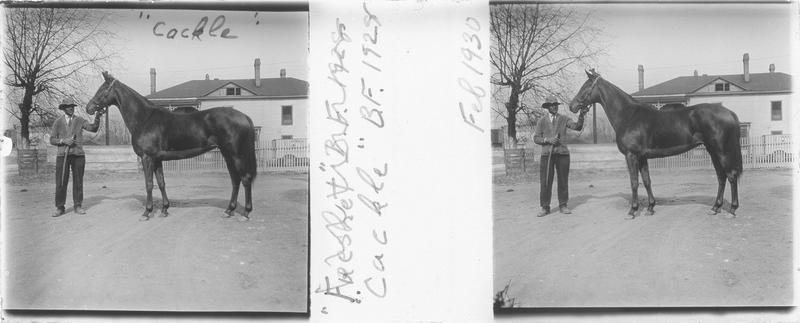 Cackle (1928), cheval de course vu de profil et homme devant une maison