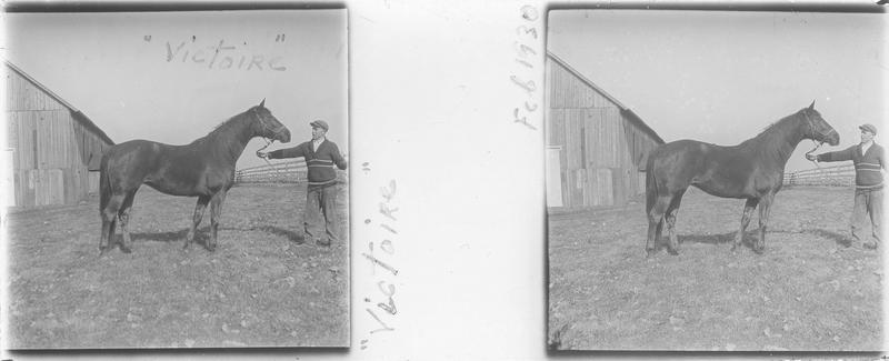 Victoire (1920), cheval de course d'origine américaine à robe alezan vu de profil et homme devant une écurie. Pedigree : Uncle (1905) et America (1914)