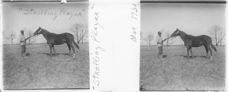 Strolling Player (1925), cheval de course d'origine anglaise à robe alezan vu de profil et homme dans un pré. Pedigree : Grand Parade (1916) et Comedienne (1913)