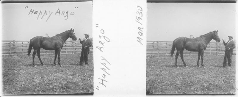 Happy Argo (1923), cheval de course d'origine anglaise à robe baie vu de profil et homme dans un pré. Pedigree : Argosy (1914) et Happy Hours (1914)