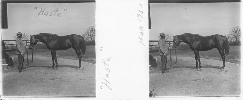 Haste (1923), cheval de course d'origine américaine à robe baie vu de profil et homme près d'une écurie. Pedigree : Maintenant (1913) et Miss Malaprop (1909)