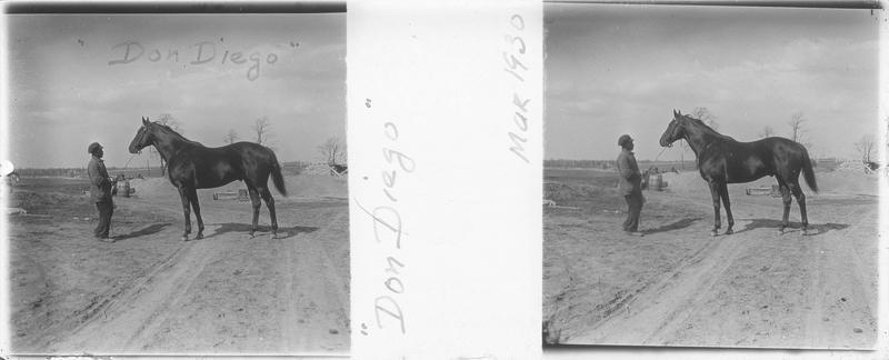 Don Diego, cheval de course vu de profil et homme sur un chemin