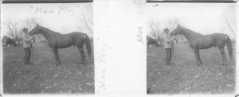Mad Play, cheval de course vu de profil et homme dans un pré
