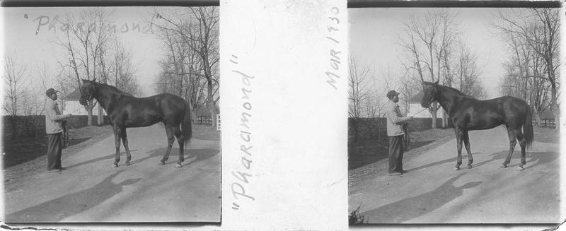 Pharamond (1925), cheval de course d'origine anglaise à robe marron vu de profil et homme sur un chemin. Pedigree : Phalaris (1913) et Selene (1919)