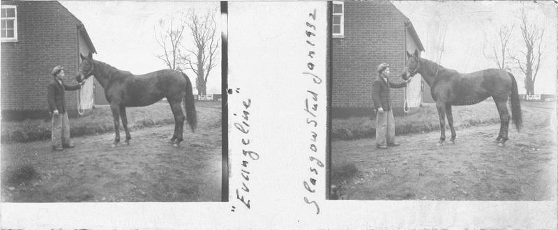 Evangeline (1925), cheval de course vu de profil et homme devant un bâtiment. Pedigree : J. Lee Wrack et Puritan Girl