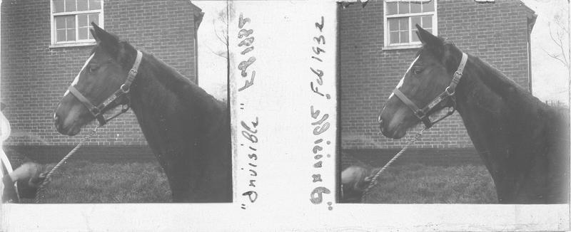 Tête d'Invisible, cheval de course vu de profil
