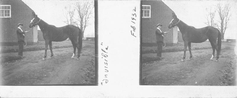 Invisible, cheval de course vu de profil et homme devant un bâtiment