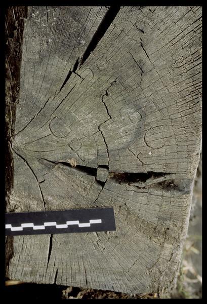 Vue des marques F.C D sur un bois sorti par l'entreprise Berthet (fouille E. Rieth).