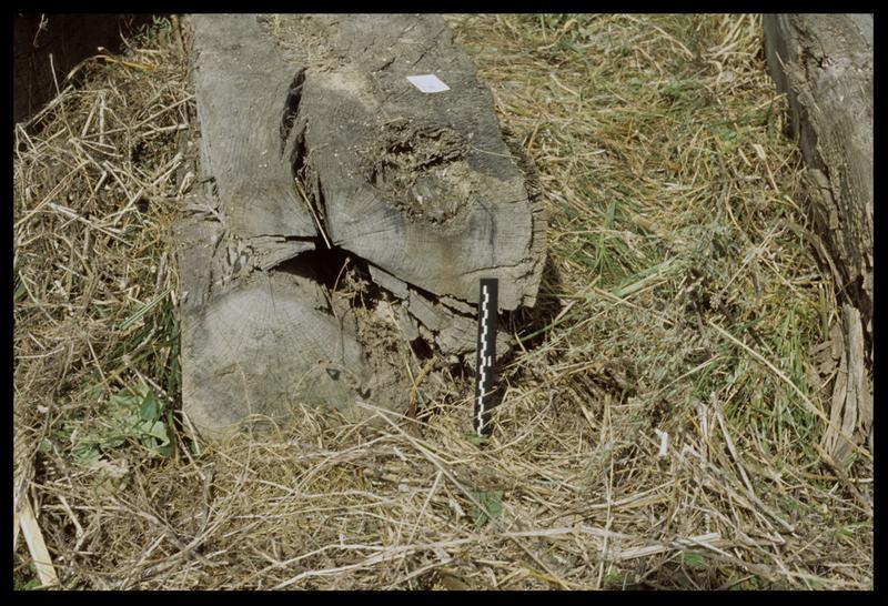 Vue d'un bois sorti par l'entreprise Berthet (fouille E. Rieth).