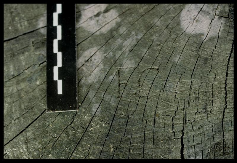 Vue de la marque F.C sur un bois sorti par l'entreprise Berthet (fouille E. Rieth).