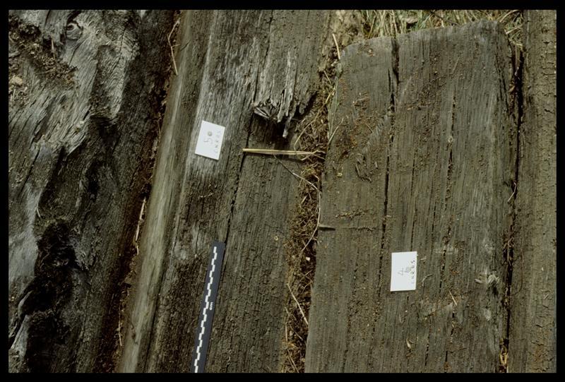 Vue de détail des bois 4 et 5 sortis par l'entreprise Berthet (fouille E. Rieth).