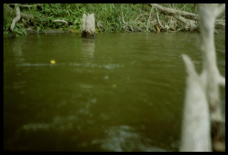 Vue d'un pieu de bois sur la rive gauche en aval (fouille E. Rieth).
