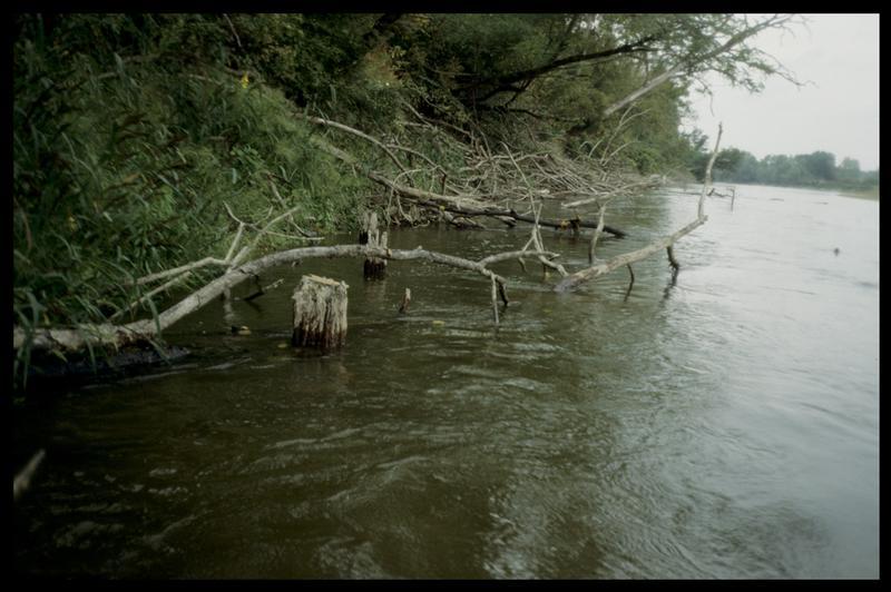Vue de deux pieux de bois sur la rive gauche en aval (fouille E. Rieth).