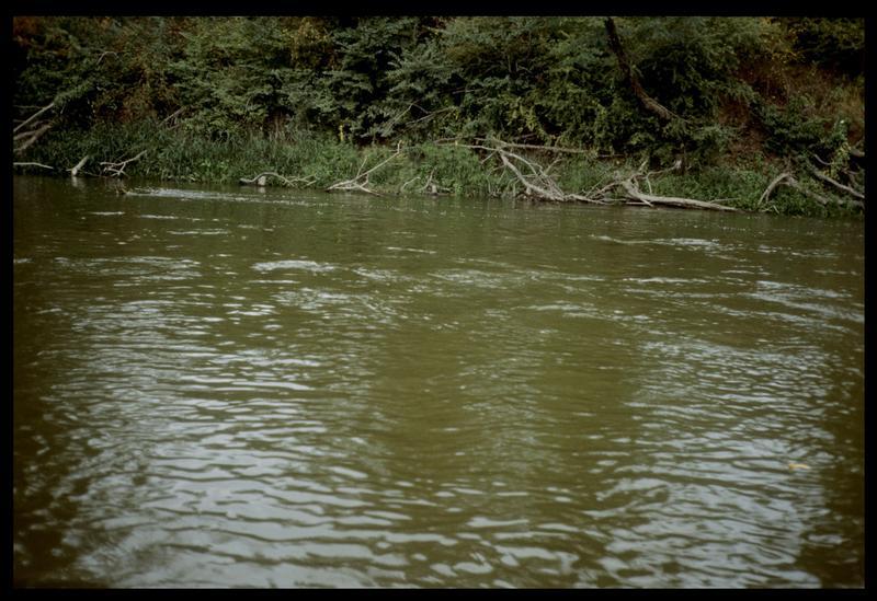 Vue des pieux de bois sur la rive gauche en aval (fouille E. Rieth).