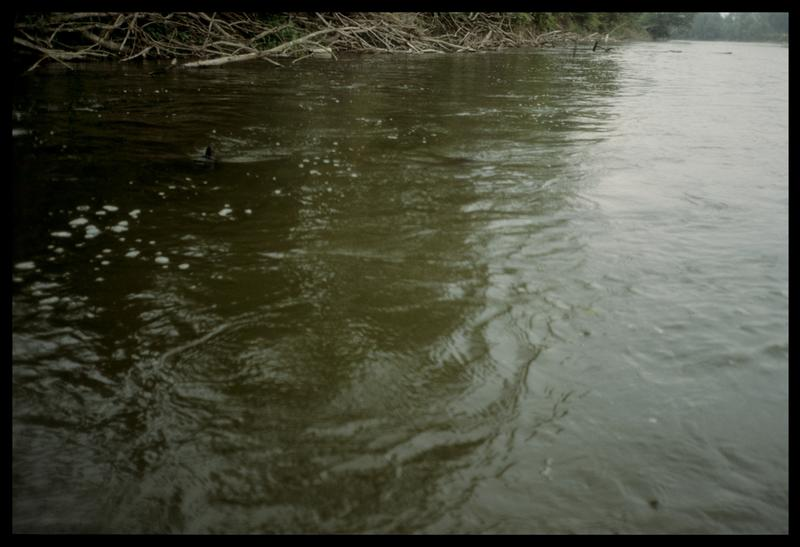 Vue des pieux de bois de la rive gauche en aval (fouille E. Rieth).