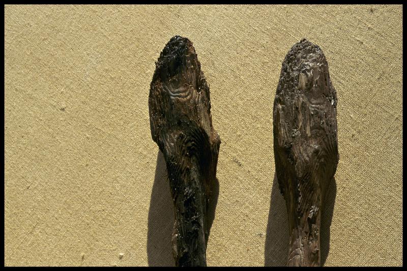 Vue de détail de l'extrémité du moulage (à droite) et de l'original d'un pieu de bois (CNRAS).
