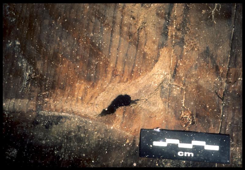 Vue sous-marine de détail du bois de la carène (fouille S. Ximénès).