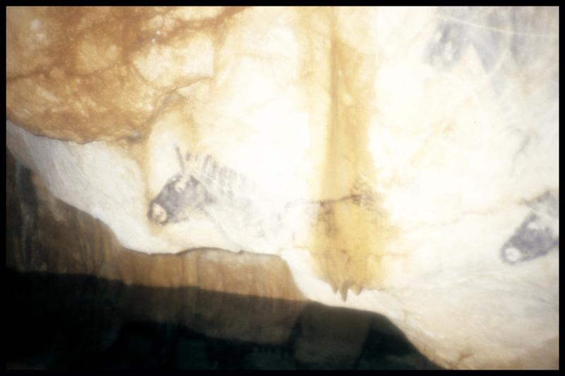 Vue des têtes de chevaux de la salle des petits chevaux (fouille J. Courtin, J. Clottes).