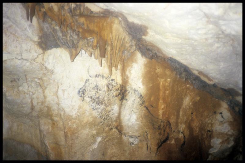 Vue du bison de la salle du grand bison (fouille J. Courtin, J. Clottes).