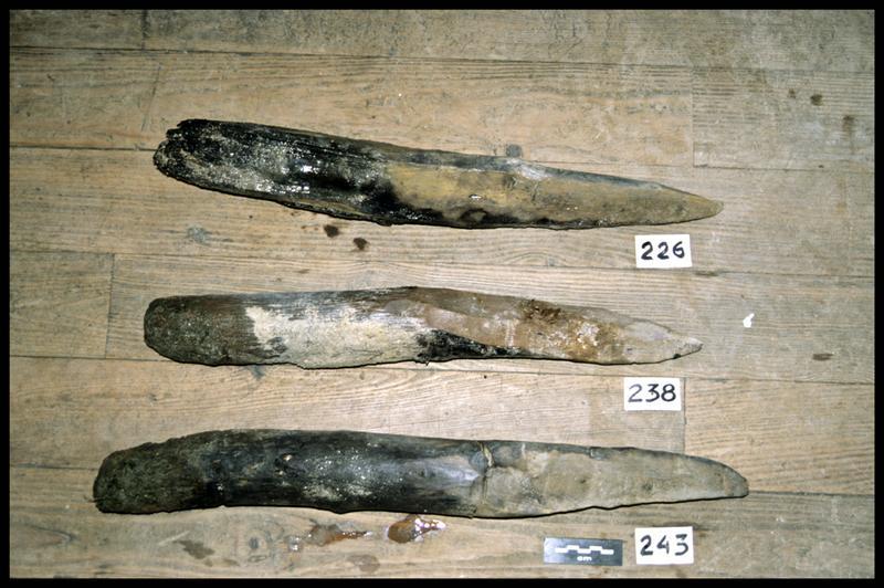 Vue des pieux de bois 226, 238 et 243 (fouille Y. Billaud/Drassm).
