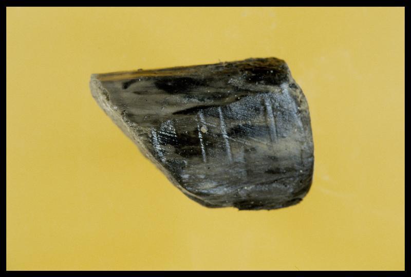 Vue d'un bouchon en bois (fouille E. Rieth).