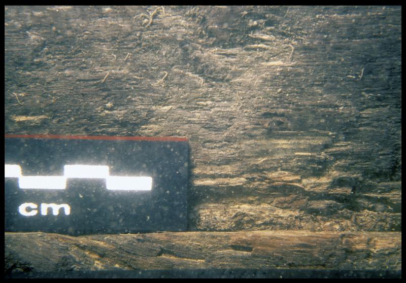 Vue sous-marine de détail du bois de bordé (fouille E. Rieth).