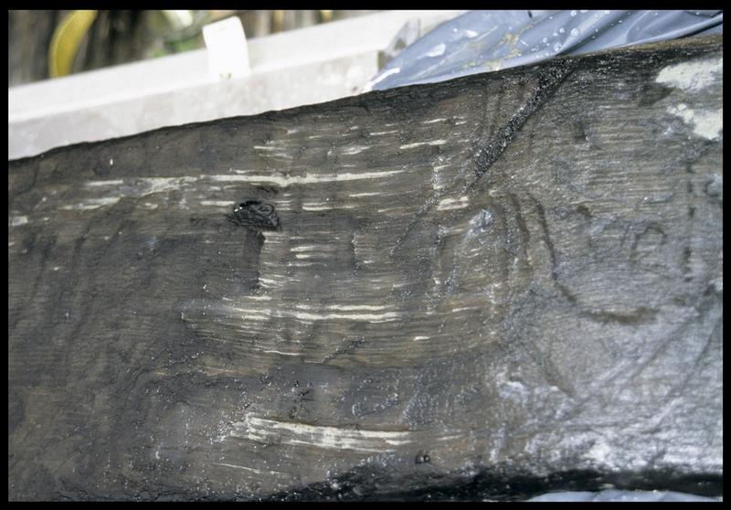 Vue de détail des traces d'outil sur la planche de bois PLP10 (fouille E. Rieth).