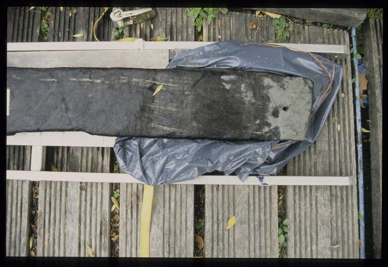 Vue de détail de la planche de bois PLP10 (fouille E. Rieth).