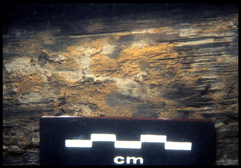 Vue sous-marine de détail du calfat d'une virure (fouille E. Rieth).