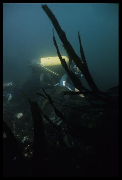 Vue sous-marine d'un plongeur au travers des algues (fouille D. David).