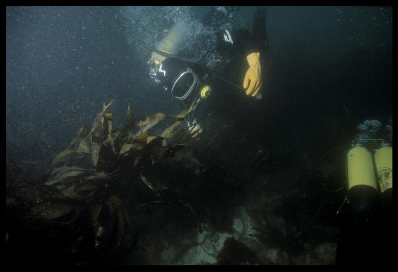 Vue sous-marine de deux plongeurs sur le site (fouille D. David).
