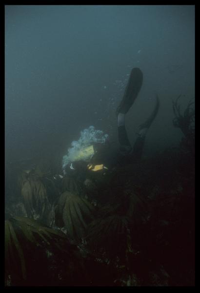 Vue sous-marine d'un plongeur sur le site (fouille D. David).