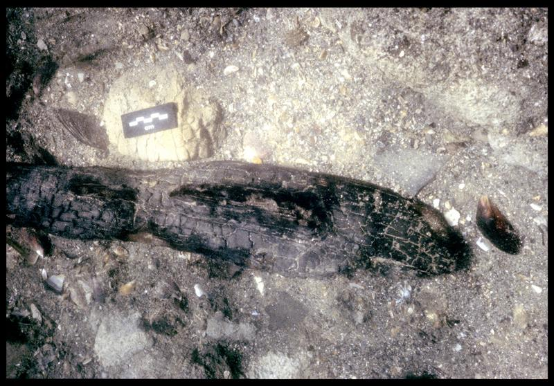 Vue sous-marine de bois carbonisé in situ (fouille F. Leroy/Drassm).
