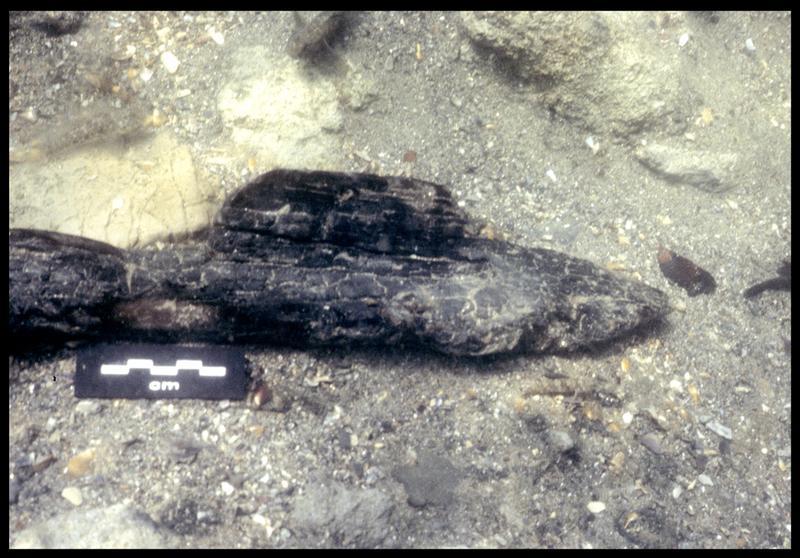 Vue sous-marine d'un fragment de bois carbonisé in situ (fouille F. Leroy/Drassm).