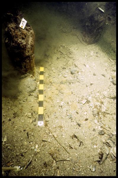 Vue sous-marine de deux pieux de bois in situ (fouille F. Leroy/Drassm).