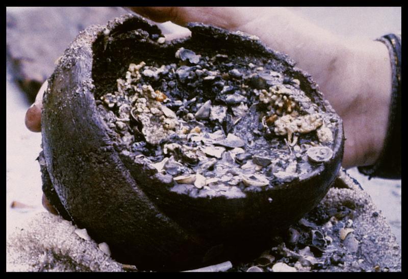 Vue de graine conservée dans un bol métallique (fouille M. L'Hour/Drassm, E. Veyrat/Drassm).