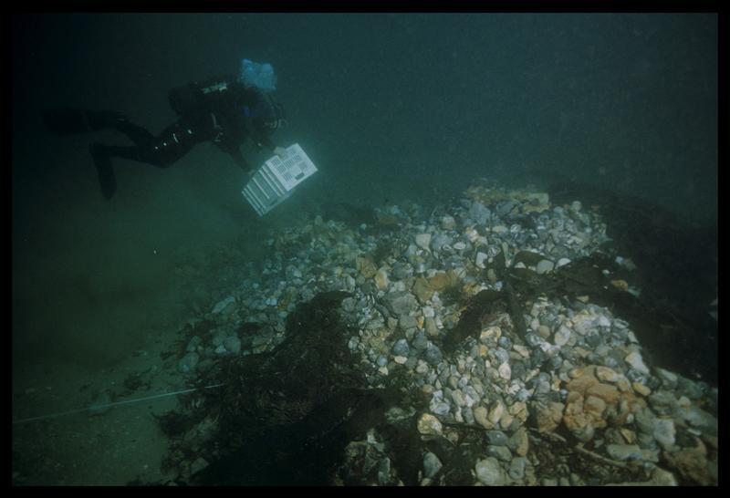 Vue sous-marine d'un plongeur vidant son panier de pralines sur le tas de déjection (fouille M. L'Hour/Drassm, E. Veyrat/Drassm).