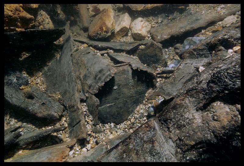 Vue sous-marine d'un seau de bois in situ (fouille M. L'Hour/Drassm, E. Veyrat/Drassm).