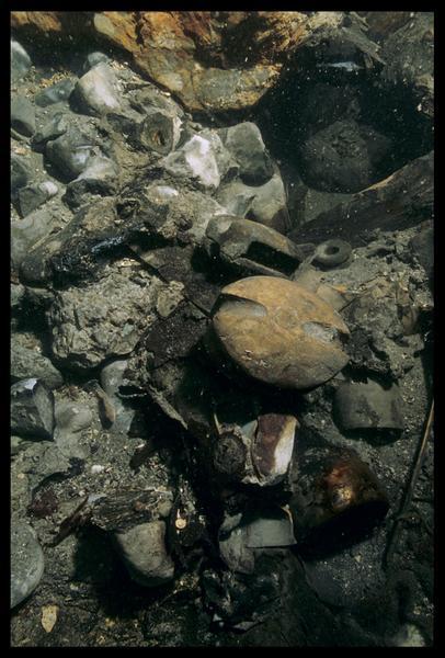 Vue sous-marine d'une poulie de bois in situ (fouille M. L'Hour/Drassm, E. Veyrat/Drassm).