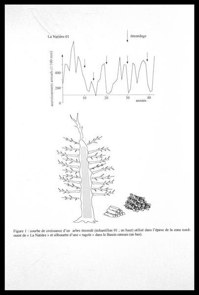 Vue de la courbe dendrologique du la localisation dans la grumme d'un élément de la carène (fouille M. L'Hour/Drassm, E. Veyrat/Drassm).