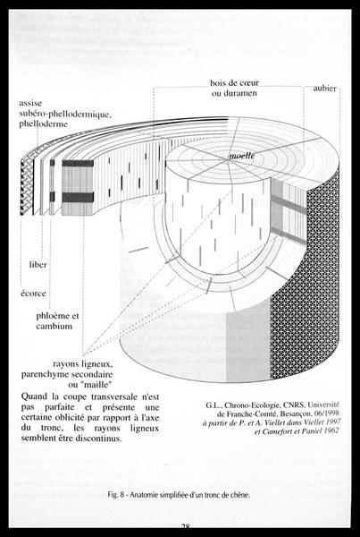 Vue du dessin de l'anatomie d'un tronc de chêne (fouille M. L'Hour/Drassm, E. Veyrat/Drassm).